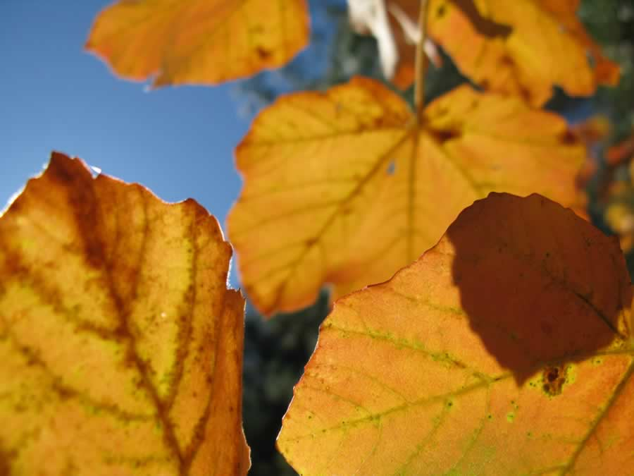 Foliage in Pogoni - Luxury Guesthouse 19.40 - Kalpaki, Ioannina, Greece